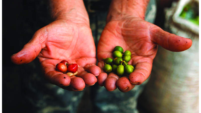 Takes Four Years to Grow Coffee